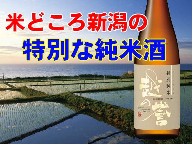 特別純米酒イメージ